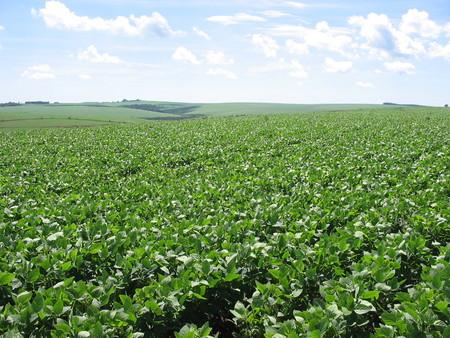 Left or right plantacao soja1