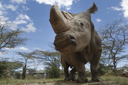 Left or right rinoce