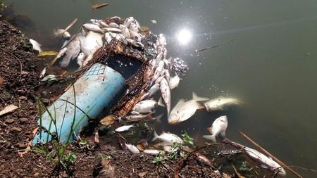 Left or right morte de peixes osvaldo duarte